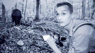 Wild Tapir Caught On Camera | The Dark: Nature's Nighttime World | BBC Earth