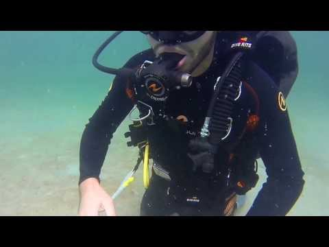 Scuba Diving in Dubai - Jumeirah 1