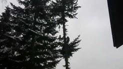 Baum fällen 2010