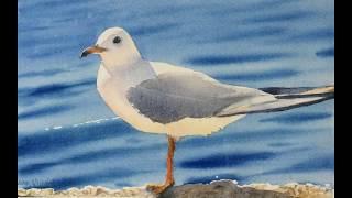 Seagull Progression