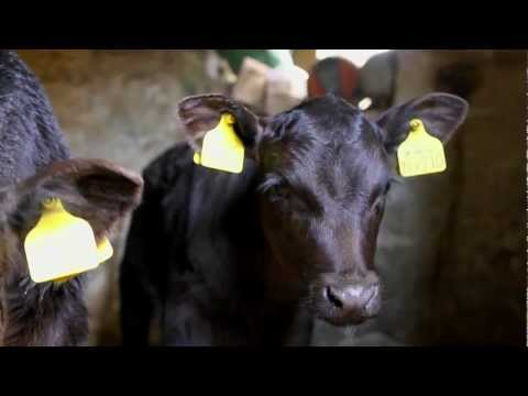 A Day In The Life Of An Organic Farmer - From OMSCo