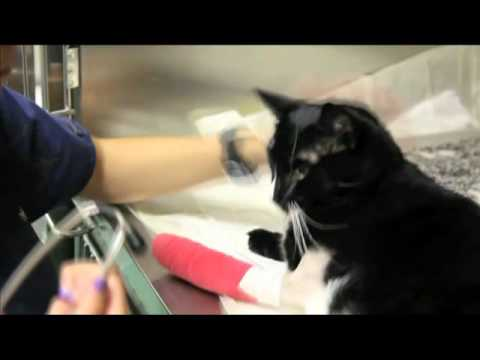 24 Hour Emergency Veterinarians & Specialists at Work