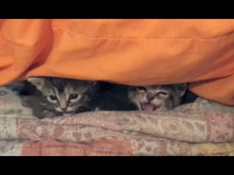 Tiny Kitten Hisses At Me and How to Disinfect the Litter Box - #11- Rescue Kitten Socialization