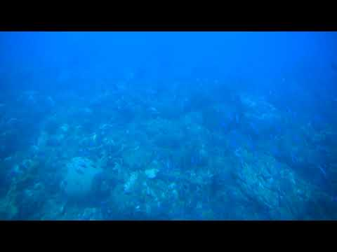 Beneath Caribbean Sea