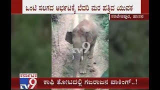 Elephant Menace Continues In Sakleshpur | Youth Climbs Tree After Jumbo Chased Him