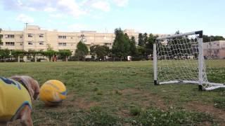 Пурин из Токио - Собака вратарь БРАЗИЛИЯ 2014