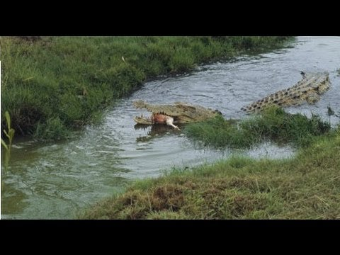 Naked girls on an alligators shot