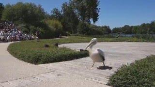 Le spectacle du parc des oiseaux