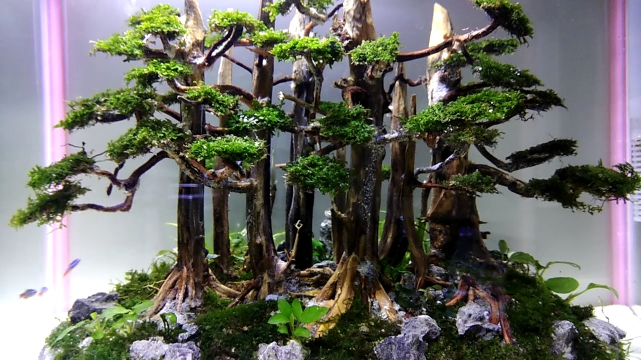 aquascape tema bonsai - YouTube
