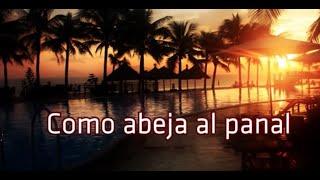 Como abeja al panal - Juan Luis Guerra