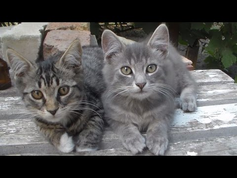 Video for viewing cats. Part 2 Hobby animals