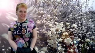 Цветет Магнолия или лучше купить диван в Киеве(Менеджер http://www.dikc.com.ua продает диваны в Киеве наслаждаясь цветением магнолии в ботаническом саду., 2016-04-19T06:26:09.000Z)
