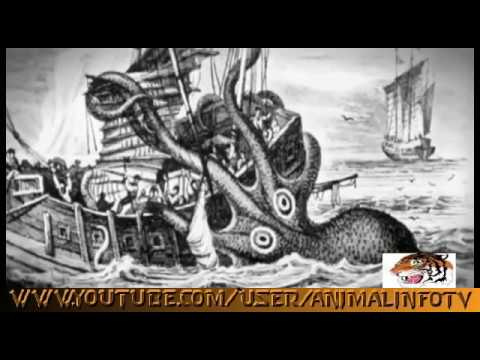 Giant Octopus of the North Pacific ★ Nature Documentary 2017
