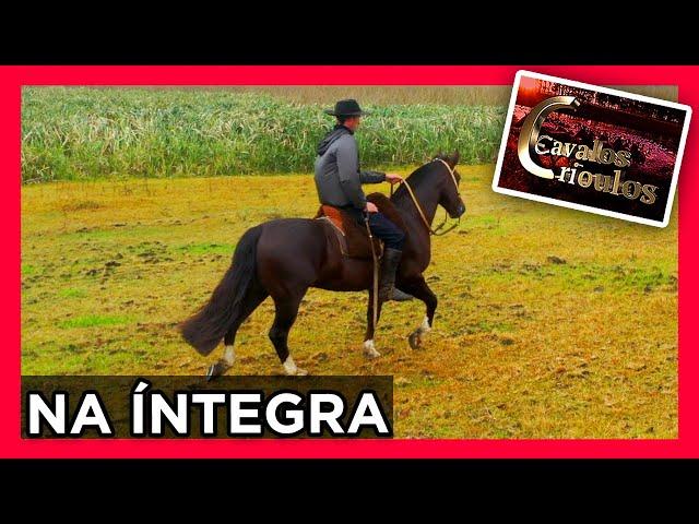 PROGRAMA CAVALOS CRIOULOS-08/08/2021