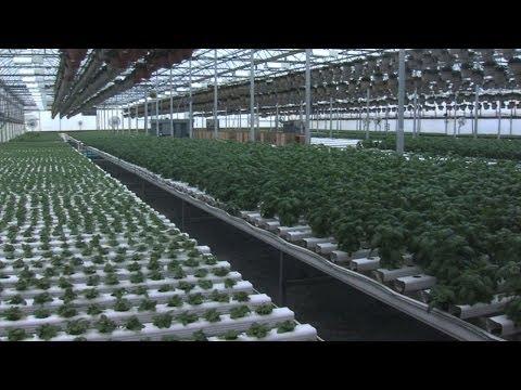 Terra Tech Hopes to Corner Marijuana Market