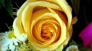 Te ofereço uma rosa