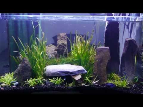 Cichlids, Angel Fish And More - Vx Tanks