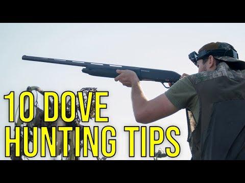 10 Dove Hunting Tips