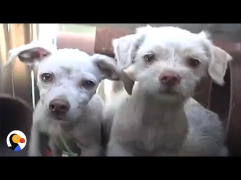 Dog Family Rescued From Steelyard SURPRISES Rescuers  | The Dodo