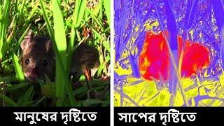 পশুদের দৃষ্টিতে পৃথিবী কেমন। একবার হলেও দেখুন। How animals see the world in Bangla
