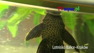Akwarium-Lotnisko Balice-Krakow-prod.Tvaqua.pl.mov