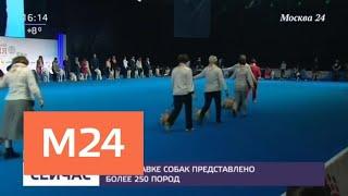На выставке собак в Москве представлено более 250 пород - Москва 24