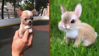 Cute Baby Animals ❤ Funny Cats and Dogs Compilation #5