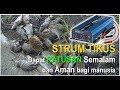 Rahasia Strum Tikus - Dapat Ratusan Tikus Semalan & Aman