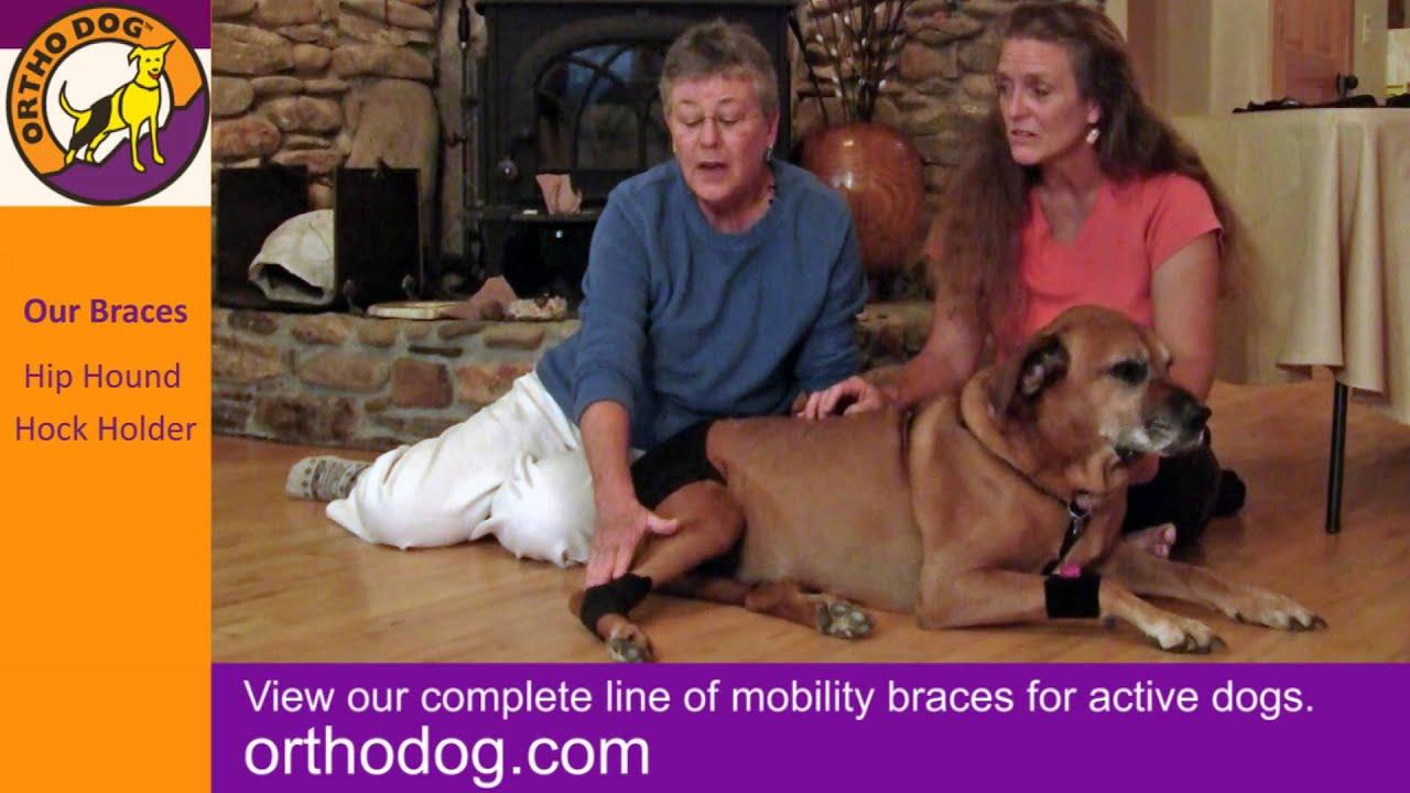 860b93ef3c Ortho Dog: Adjustable Dog Leg Braces and Wraps