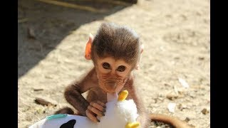 Cute Monkeys Part #52 - Baby Baboon Monkey Eating Banana & Cake...Really Delicious or Unappetizing?