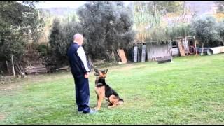 Video Tito di Casa Cupello - Il cane da lavoro download MP3, 3GP, MP4, WEBM, AVI, FLV Mei 2018
