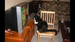 Кот Борис смотрит кино