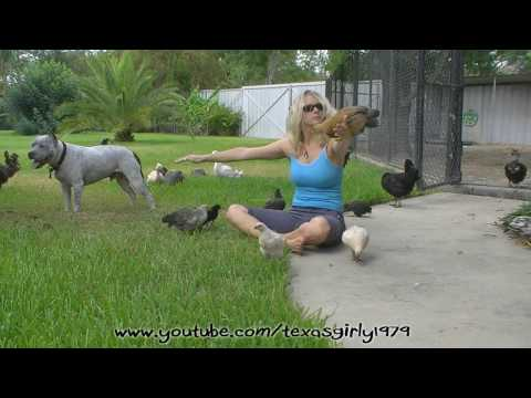 """Play Day"" Pit Bull Sharky, Chicks and texasgirly1979"