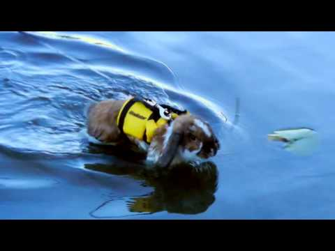 Pegasus The Bunny Goes Swimming Youtube