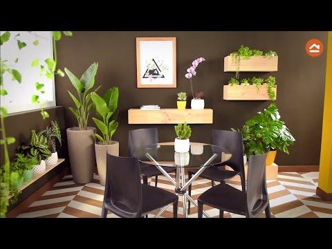 Decora tu casa con plantas de interior