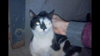 Спб, найдена чернобелая кошка с черным носом 10мес+