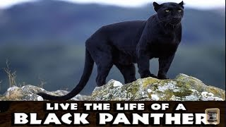 Panther Simulator -PART 1- By Gluten Free Games -Compatible with iPhone, iPad, and iPod, Android