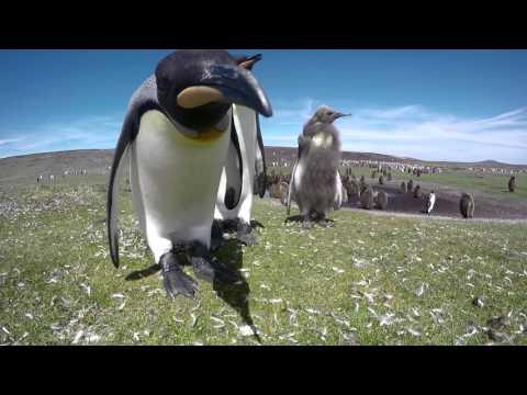 Falkland Islands 2015
