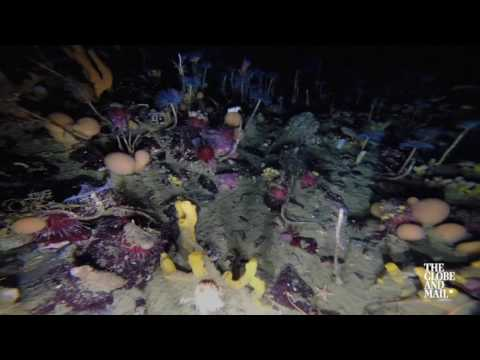 See the colourful life forms beneath Antarctic sea ice