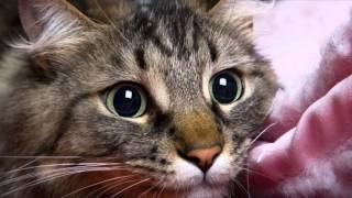 Сказка для детей: Котенок Сливка