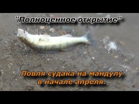 Карп на кукурузу - donbass-