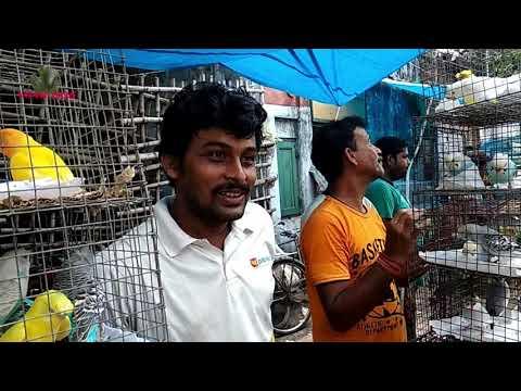 LATEST PRICE UPDATE OF BIRD AT GALIFF STREET PET MARKET KOLKATA INDIA   7TH JULY 2019 VISI