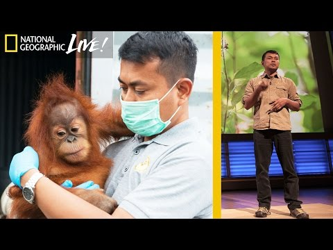 Saving Orangutans in Sumatra