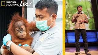 Saving Orangutans, the Gardeners of the Forest - Nat Geo Live