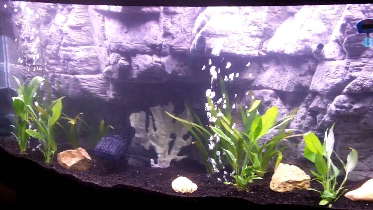 Freshwater aquarium no fish - 3d Background In My 72 Gallon Bow Tank No Fish Yet