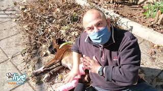 Paura per Asia: aggredita da un pitbull, ora ha bisogno di cure