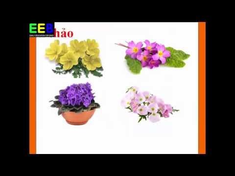 Các loài hoa|Bé học tiếng Anh| Bé học tên các loại hoa trong tiếng Anh| Giáo dục sớm cho trẻ EEB