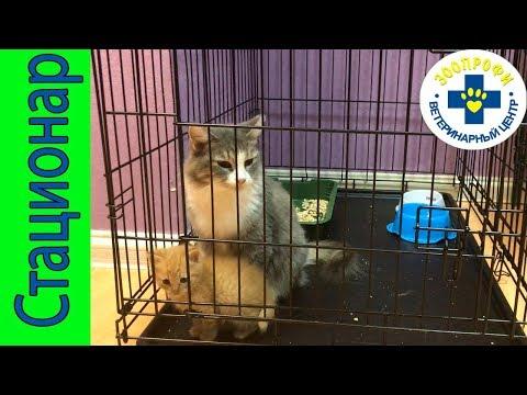Ветеринарная Клиника Стационар для Котят