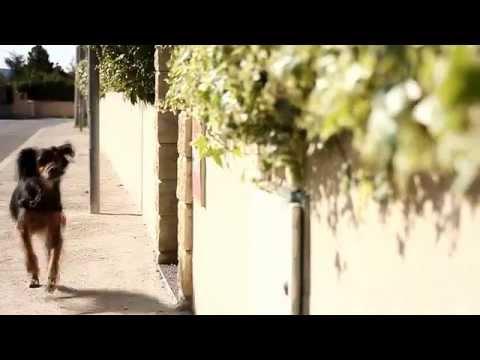 Larmée [Très court métrage]