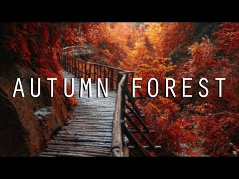 NATURE SOUNDS /// Autumn Forest Sound 11 Hours [ASMR Ambience]